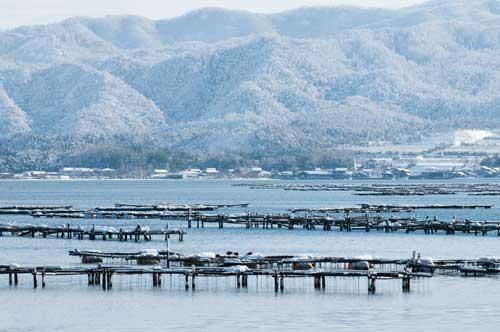 久美浜湾牡蠣棚