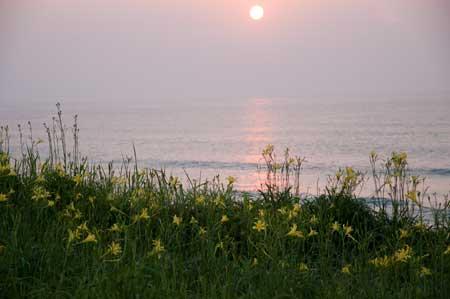 夕日とユウスゲ